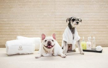 Exclusive Spa And Pet Resort – A Hotel For Dogs Of All Breeds